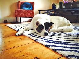 area rug cleaning dog urine designs