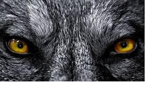 wolf eyes in the dark. Simple Dark Where Music Meets Your Desktop With Wolf Eyes In The Dark
