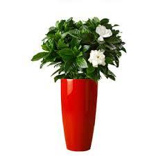 Paper Mache Flower Paper Mache Flower Pots Planters From China Famous Supplier Buy