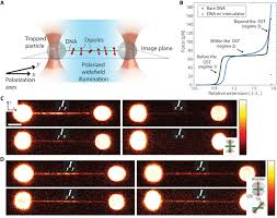 Polarization Of Light Physics Ppt Single Molecule Polarization Microscopy Of Dna Intercalators