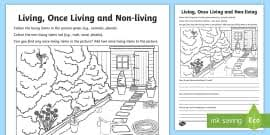 Venn Diagram Living And Nonliving Things Sorting Living Things Non Living Things Science Lesson