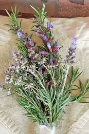 spring care tips for your herb garden