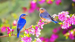 Birds and Flowers Desktop Wallpapers ...