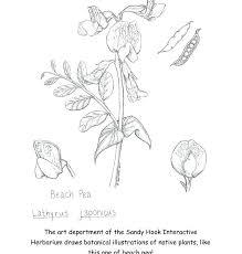 Botany Coloring Pages Download Botany Coloring Book Free Botany