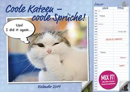 Coole Katzen A3 Duo Kal 2019 Kalender Bei Weltbildch Kaufen