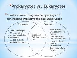 Compare Prokaryotic And Eukaryotic Cells Venn Diagram Cell Unit Review Ppt Download