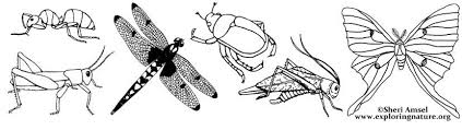 Small Picture Insect Coloring Pages