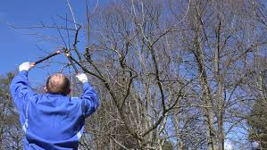 How To Prune Old Apple Trees  YouTubePruning Fruit Trees Video
