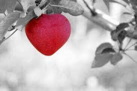 Zitate Zu Herz Den Weg Des Herzens Gehen