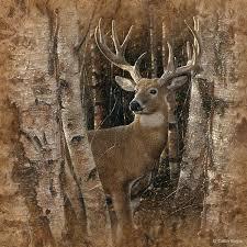 deer in trees wildlife painting art print
