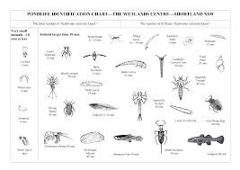 Mite Identification Chart Pondlife Identification Chart