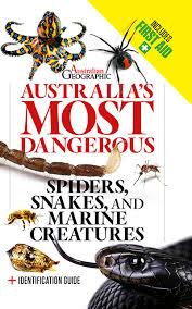 Australian Spiders The 10 Most Dangerous Australian