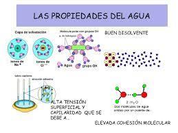 Tema 1 La organizacion de la materia. Agua y sales minerales.