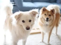 「犬」の画像検索結果