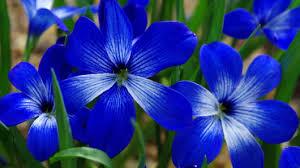 ألوان الطبيعة في الطبيعة الرقيقة images?q=tbn:ANd9GcS
