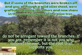 Image result for The wild olive branch of Romans 11 pics