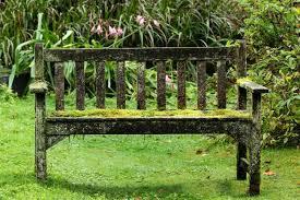 Elegant Mousse Pelouse Gazon Jardin Supprimer