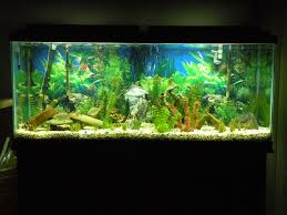 55+gallon+fish+tank+ideas | LED Aquarium Moonlights