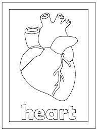 Human Heart Coloring Pages Human Heart Coloring Pages Human Heart