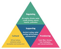Ecosystem Pyramid Chart Pyramid Chart Examples