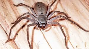 how to kill spiders in house. How To Get Rid Of Spiders In Your House Kill