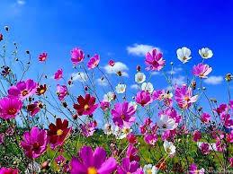 Flowers desktop wallpapers spring ...