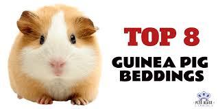 top 8 best guinea pig beddings 2020