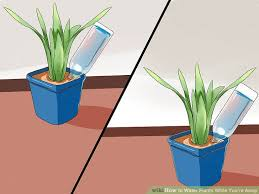 diy house plant watering system elegant simple ways to water plants while you re away wikihow