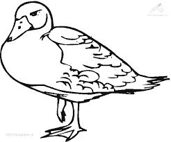 1001 Kleurplaten Dieren Vogels Kleurplaat Eend