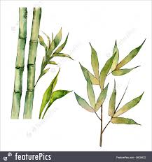 bamboo tree in a watercolor style royalty free stock ilration