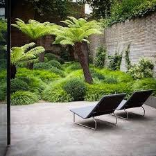 Small Picture The 25 best Buxus sempervirens ideas on Pinterest Buxus