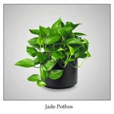 plants for office cubicle. low light indoor plants from interior plantscapes for office cubicle