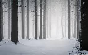 winter mac backgrounds winter forest wallpapers top free winter forest