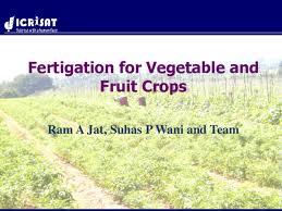 Fertigation Compatibility Chart Pdf Fertigation In Vegetable And Fruit Crops Ram A Jat