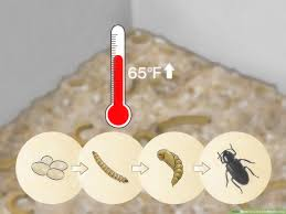 Mealworm Size Chart How To Care For Mealworms 9 Steps With Pictures Wikihow