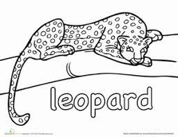 Leopard Worksheet Educationcom