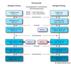 Omega - 3, fettsäure, dHA verbessert Gedächtnis und