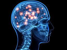 Resultado de imagen de Las conexiones del cerebro