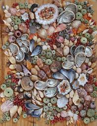 sea shells collection the best shell beach ever shells shells shells shells shell