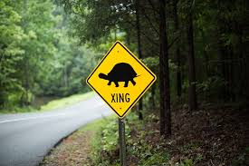 shared space a photo essay of wildlife in charlotte charlotte  a turtle crossing sign at reedy creek park alerts drivers to keep and eye out for