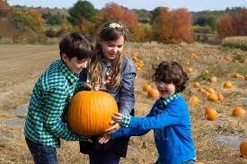 <b>Three Pumpkins</b> Photography - Home | Facebook