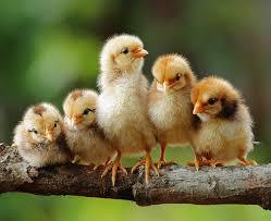 صور حيوانات أليفة images?q=tbn:ANd9GcS