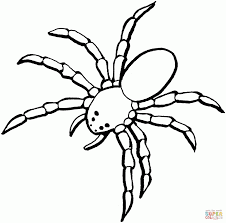 Small Picture spider color pages 100 images spider coloring pages 14