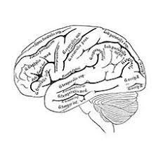 Small Picture Human Brain Coloring Pages Images Of Photo Albums Brain Anatomy