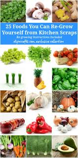 Kitchen Scrap Gardening 25 Foods You Can Re Grow Yourself From Kitchen Scraps Diy Crafts