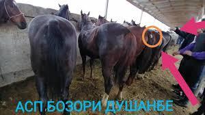 Мол бозор шахритуз майда моллар нархлари. Loshad Asphoi Furushi Molbozori Dushanbe 2021 Youtube