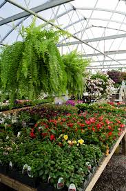 about us we are a garden center and gift located in the foothills of