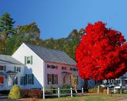 autumn blaze maples