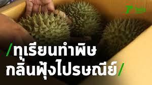 กลิ่นทุเรียนไทยป่วนไปรษณีย์เยอรมัน   24-06-63   ข่าวเที่ยงไทยรัฐ - YouTube