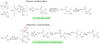 lipids   condensations